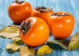 Persimmon fruit on rustic table in vintage style