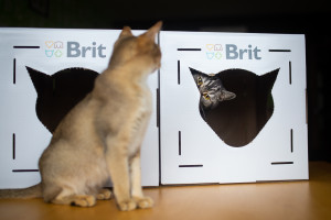 brit_krabice1