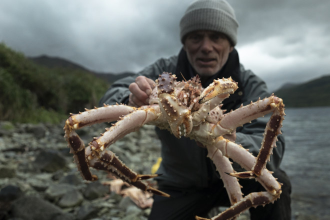 Landscape MS of Jeremy Wade crouching down holding a spider crab to the camera against a moody sky. Crab in focus, Jeremy out of focus.  Location: Dutch Harbor, AK