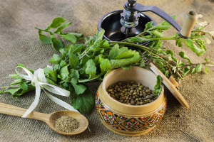 coriander - fresh leaves, seeds and ground coriander