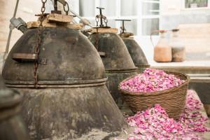 Rose-Iran